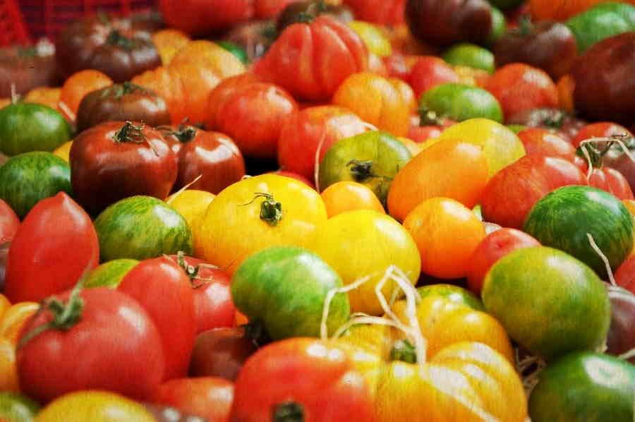 Provence-Tomato-Avignon-Gourmet-Tours